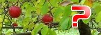 δέντρα και φρούτα