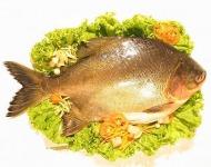 ψάρια και δέρμα
