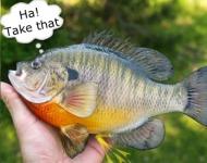 ψάρια και ούρα