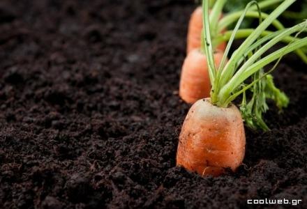 Τα καρότα είναι πλούσια σε βιταμίνες για υγιή και λαμπερά μαλλιά