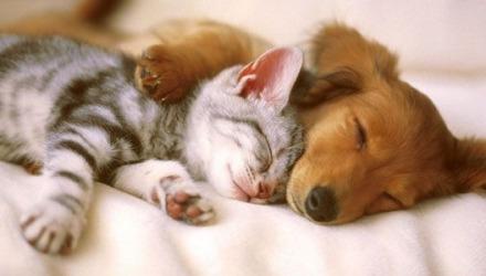 ο σκύλος και η γάτα μπορεί να μας προκαλέσουν φαγούρα