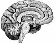 το αριστερό ημισφαίριο του εγκεφάλου
