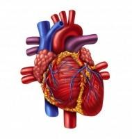 η άσκηση βοηθά την καρδιά