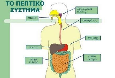 το πεπτικό σύστημα