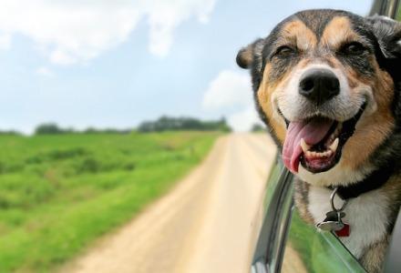 γιατί οι σκύλοι ταξιδεύουν με το κεφάλι εκτός παραθύρου