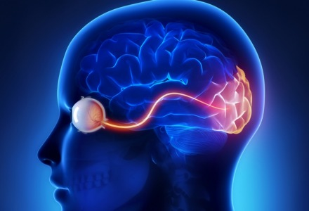 βλέπουμε με τον εγκέφαλο