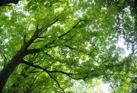 πως τα πράσινα φύλλα γίνονται κίτρινα