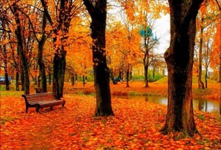 που οφείλεται το κίτρινο χρώμα στα φύλλα
