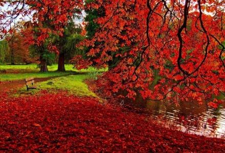 εντυπωσιακά κόκκινα φύλλα