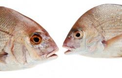 χαζά ψάρια