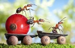 μυρμήγκια απίστευτα