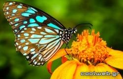 Με ποιο τρόπο μυρίζουν οι πεταλούδες