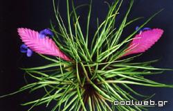 φοβερά φυτά