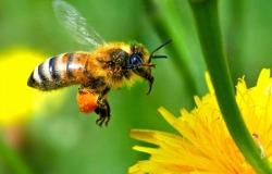 μέλι μέλισσα